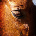 Horse Profile by Joe Carini
