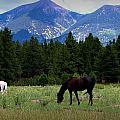 Horse Ranch Below The Peaks by Aaron Burrows