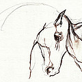 Horse Sketch by Angel Ciesniarska