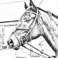 Horse Sketch by Janice Byer