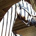 Horse Stripes by Mike Quinn