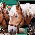 Horse Talk by Trever Miller