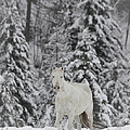 Horse Winter by Diane Bohna