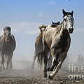 Horse With No Name by Wildlife Fine Art