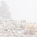 Horse With Winter Season Snow And Fog by James BO Insogna