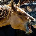 Horse Yawn by Bob Keller