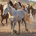 Horses 7 by Larry White