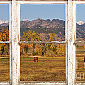 Horses And Autumn Colorado Front Range Picture Window View by James BO  Insogna