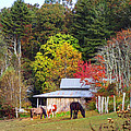 Horses And Barn In The Fall by Duane McCullough
