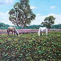 Horses And Heather In The New Forest by Martin Davey