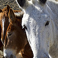 Horses And Mules   #0757 by J L Woody Wooden