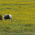 Horses And Wildflowers   #8511 by J L Woody Wooden