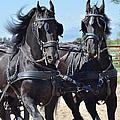 Horses At Driving Clinic by Kae Cheatham