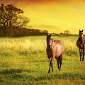 Horses At Sunset by Amanda Elwell