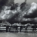 Horses Black And White Infrared Stormy Sky Nature Landscape by Kathy Fornal