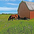 Horses By A Barn Along Confederation Trail-pei by Ruth Hager