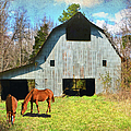 Horses Call This Old Barn Home by Sandi OReilly