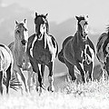 Horses Crest The Hill by Carol Walker