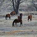 Horses by Ernie Echols