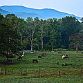 Horses Graze At Dawn by Frozen in Time Fine Art Photography