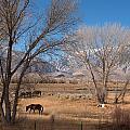 Horses Graze Beside The Owens River Near Bishop by Carol M Highsmith