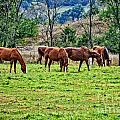 Horses Grazing by M Dale