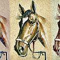 Horses Hand Drawing by Daliana Pacuraru