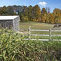 Horses In Autumn Pasture by Ray Summers Photography
