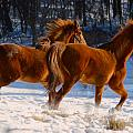 Horses In Motion by Tracy Winter