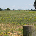 Horses In The Field by Beth Vincent