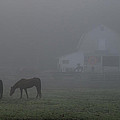Horses In The Fog by Mick Anderson