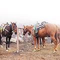 Horses In The Mist - Haleakala by Paulette B Wright
