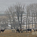 Horses In The Snow   #7940 by J L Woody Wooden