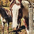 Horses by Jill Lang