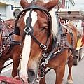 Horses by Jo Dawkins