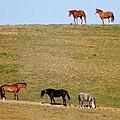 Horses Of Hayward by Elaine Burlew