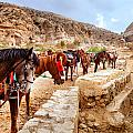 Horses Of Petra by Alexey Stiop