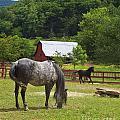 Horses On A Farm by Jill Lang