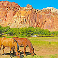Horses On The Gifford Farm In Fruita In Capitol Reef National Park-utah by Ruth Hager