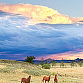 Horses On The Storm 2 by James BO  Insogna