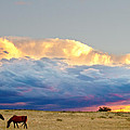 Horses On The Storm by James BO  Insogna