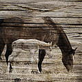 Horses On Wood by Steve McKinzie