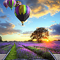 Hot Air Balloons And Lavender Book by Matthew Gibson