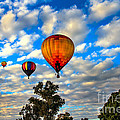 Hot Air Balloons Over Trees by Robert Bales