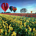 Hot Air Balloons Over Tulip Field by William Lee