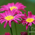 Hot Pink by Lori Tordsen