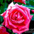 Hot Pink Rose by Alys Caviness-Gober