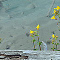 Hot Spring Flowers by Bruce Gourley