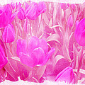 Hot Stuff   In Your Face Pink Tulips by Mother Nature