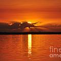Hot Summer Sunrise  by Davids Digits